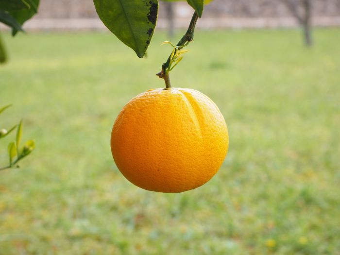 Vitamina C para la piel