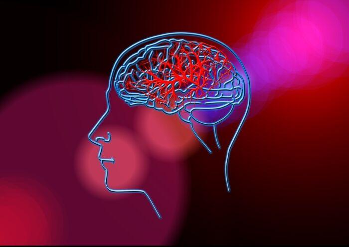 Circulación del cerebro